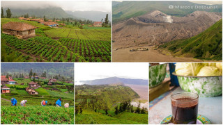 Highlights: Mount Bromo Viewpoint & Cemoro Lawang