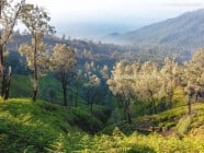 Views on the morning trek to Mount Ijen crater lake, near Banyuwangi, in East Java, Indonesia