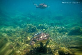Swimming with Sea Turtles in Apo Island, Dauin, Oriental Negros, Philippines