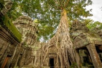 Huge trees growing out of Ta Prohm (temple), in Angkor, Siem Reap, Cambodia