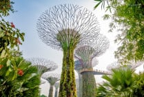Super trees, at Gardens By The Bay, in Singapore