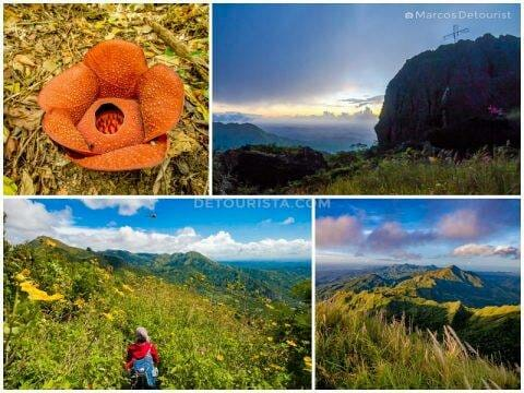 Mount Napulak summit trek and blooming Rafflesia in Igbaras, Iloilo