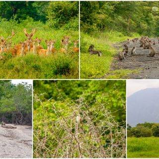 Baluran National Park — Bekol Savannah, Bama Beach & Wildlife Encounters