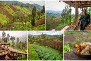 Ngadas Village Walk & Homestay near Mount Bromo